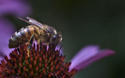 Challenge 12: Bienen und Insekten etwas zum  Futtern pflanzen