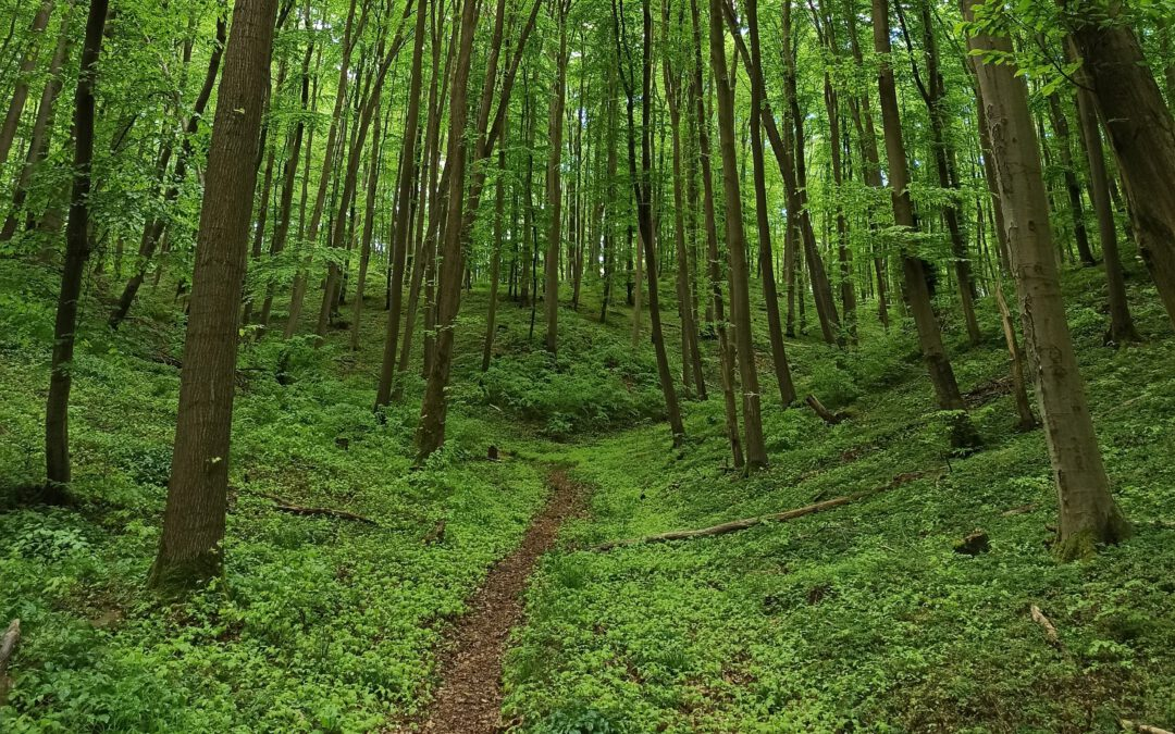 Waldbaden – die Seele baumeln lassen